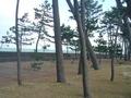 松並木の散策路
