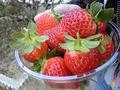 真っ赤で可愛いイチゴちゃんwww