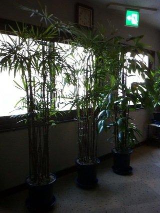 客室フロアの廊下に観葉植物