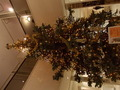中には本物の樹木のツリーがあります