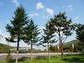 朝里ダム公園