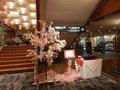 新宿プリンスホテルの桜祭り