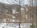 マリンヒルホテル小樽近郊の白樺林