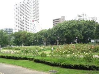 靭公園バラ園