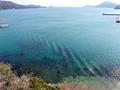 海の青さを、しばらく見ていなかった・・・