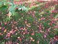 散りばめられた紅葉
