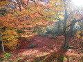 京都の紅葉は・・・