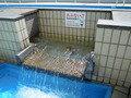きれいな水です。