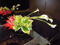 ロビー階のお花です。