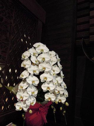 たくさんの胡蝶蘭