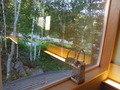 廊下にある窓からの風景