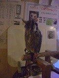 フクロウがお出迎え