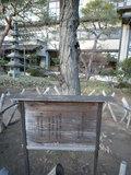 高松宮様の記念植樹