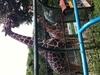 動物との距離が近い、無料の野毛山動物園がすぐ近くです!
