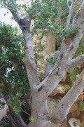 廊下から見える木