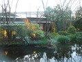和食レストランの庭園1
