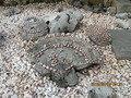 貝殻を敷きつめたエントランス