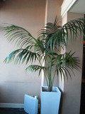 エレベーターホールの植物