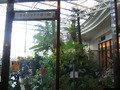 オオゴマダラ蝶々園