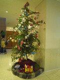 クリスマスツリーが飾ってありました