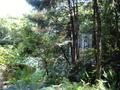 ホテルラウンジから庭の眺め