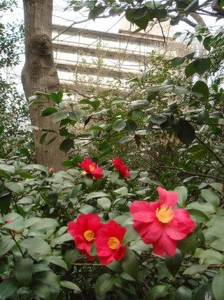 椿と椿山荘