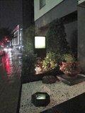 玄関横の植栽