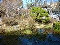 玄関前の日本庭園です。