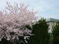 宇都宮で桜の美しいホテルといえばここ!