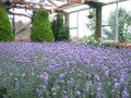 美瑛「ぜるぶの丘」の室内栽培