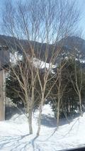 別館の客室窓からの眺め