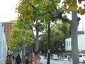地下鉄外苑前駅から歩く道。正面レンガ色が日本青年館、右手が神宮球場。