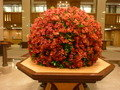 1階ロビーの豪華な季節のお花