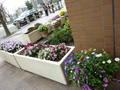 緑化事業 ホテル周りに沢山のお花