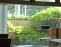 レストランから見える中庭の植え込み