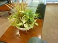 ロビーにさりげなく置かれた植物