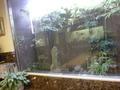 ロビー待合にある、ガラス張りの中庭風景