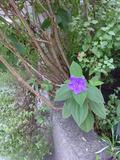 植え込みにあるかわいいお花