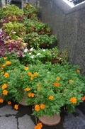 豪華なお花たち(入口階段)