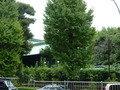 御茶の水駅から歩くと見える「湯島聖堂」
