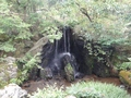 金閣寺庭園2