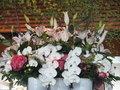 4月のお花