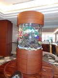 熱帯魚が観賞できます