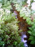 庭園の清流でホタル鑑賞