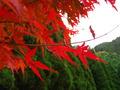 もみじの紅葉が特に綺麗でした