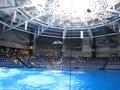 イルカのショーが見られる会場