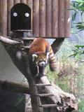 上野動物園まで近い