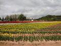最寄りの世羅高原農場