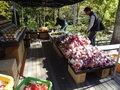ハルニレテラスの果物朝市