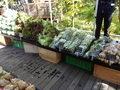 ハルニレテラスの野菜の朝市